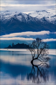Lone Willow Reflection, Lake Wanaka, New Zealand