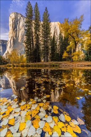 Gary Hart Photography: Floating Leaves, El Capitan, Yosemite