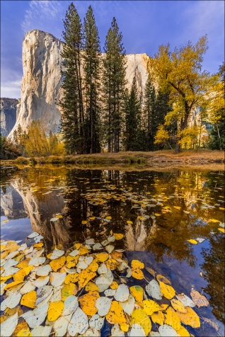 Gary Hart Photography: Floating Leaves, El Capitan, Yosemite