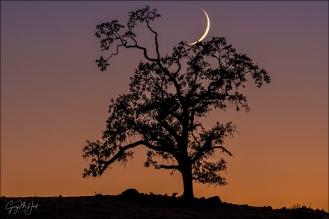 Gary Hart Photography: New Moon and Oak, Sierra Foothills (California)
