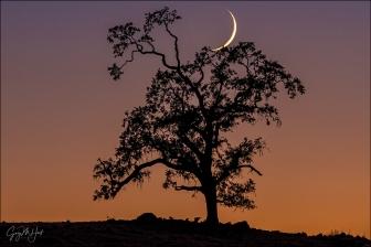Gary Hart Photography: New Moon and Oak, Sierra Foothills, California