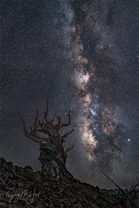 Gary Hart Photography: Dark Night, Milky Way and Ancient Bristlecone, Schulman Grove (California)