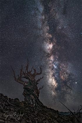 Gary Hart Photography: Dark Night, Milky Way and Ancient Bristlecone, Schulman Grove (California)