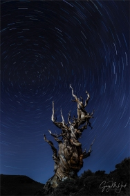 Gary Hart Photography: Bristlecone Carousel, Schulman Grove, California