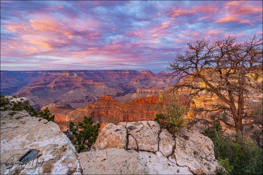 Gary Hart Photography: Sunset and Tree, Mather Point, Grand Canyon