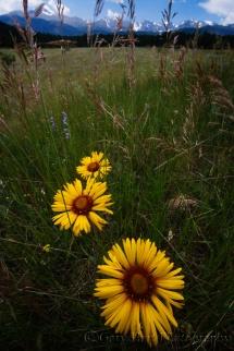 Gary Hart Photography: Spring Meadow, Rocky Mountain National Park, Colorado