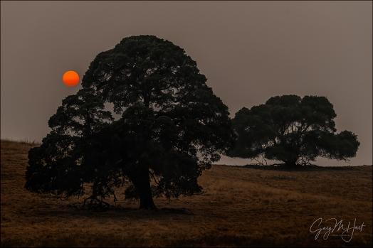 Gary Hart Photography: Oaks and Smoke, Sierra Foothills, California