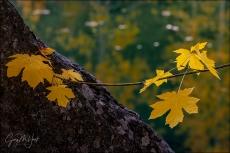 Gary Hart Photography: Autumn Reflection, Merced River, Yosemite