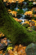 Gary Hart Photography: Fallen Color, Fern Spring, Yosemite