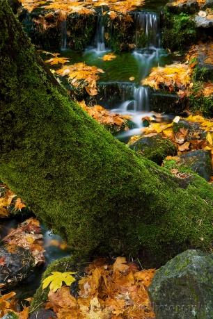 Gary Hart Photography: Fallen Color, Fern Spring, Yosemite