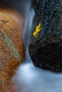 Gary Hart Photography: Autumn Yin and Yang, Bridalveil Creek, Yosemite