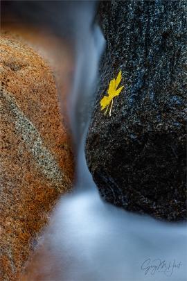 Gary Hart Photography: Autumn Yin and Yang, Bridalveil Creek, Yosemite