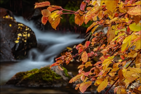 Gary Hart Photography: Creekside Color, Mill Creek, Eastern Sierra