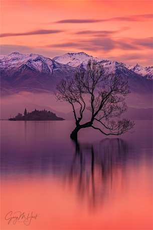 Gary Hart Photography: Winter Sunset, Wanaka Willow Tree, New Zealand