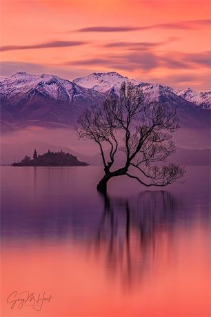 Gary Hart Photography: Winter Sunset, Wanaka Willow Tree, New Zealand