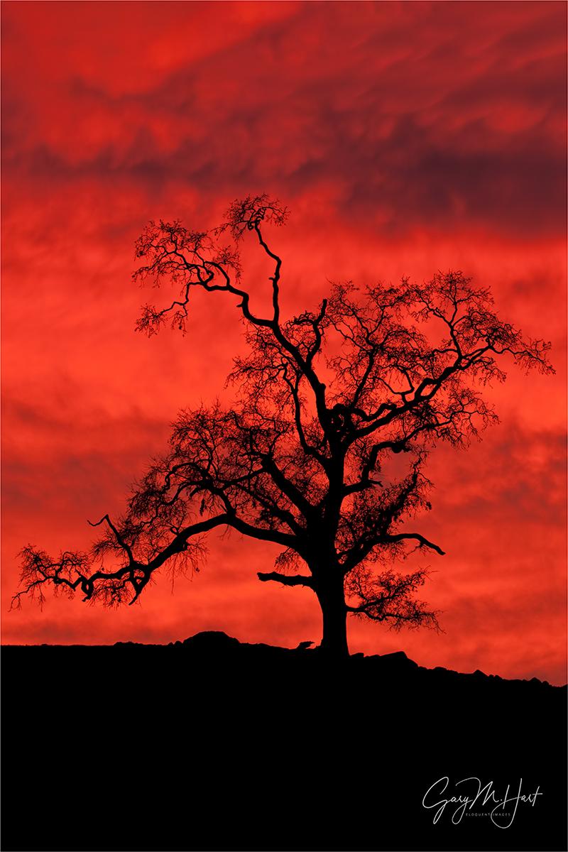 Gary Hart Photography: Sky on Fire, Sierra Foothills, California