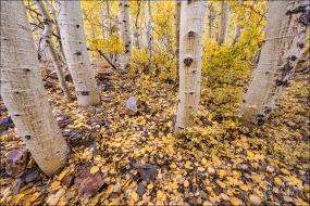 Gary Hart Photography: Aspen Carpet, Lundy Canyon, Eastern Sierra